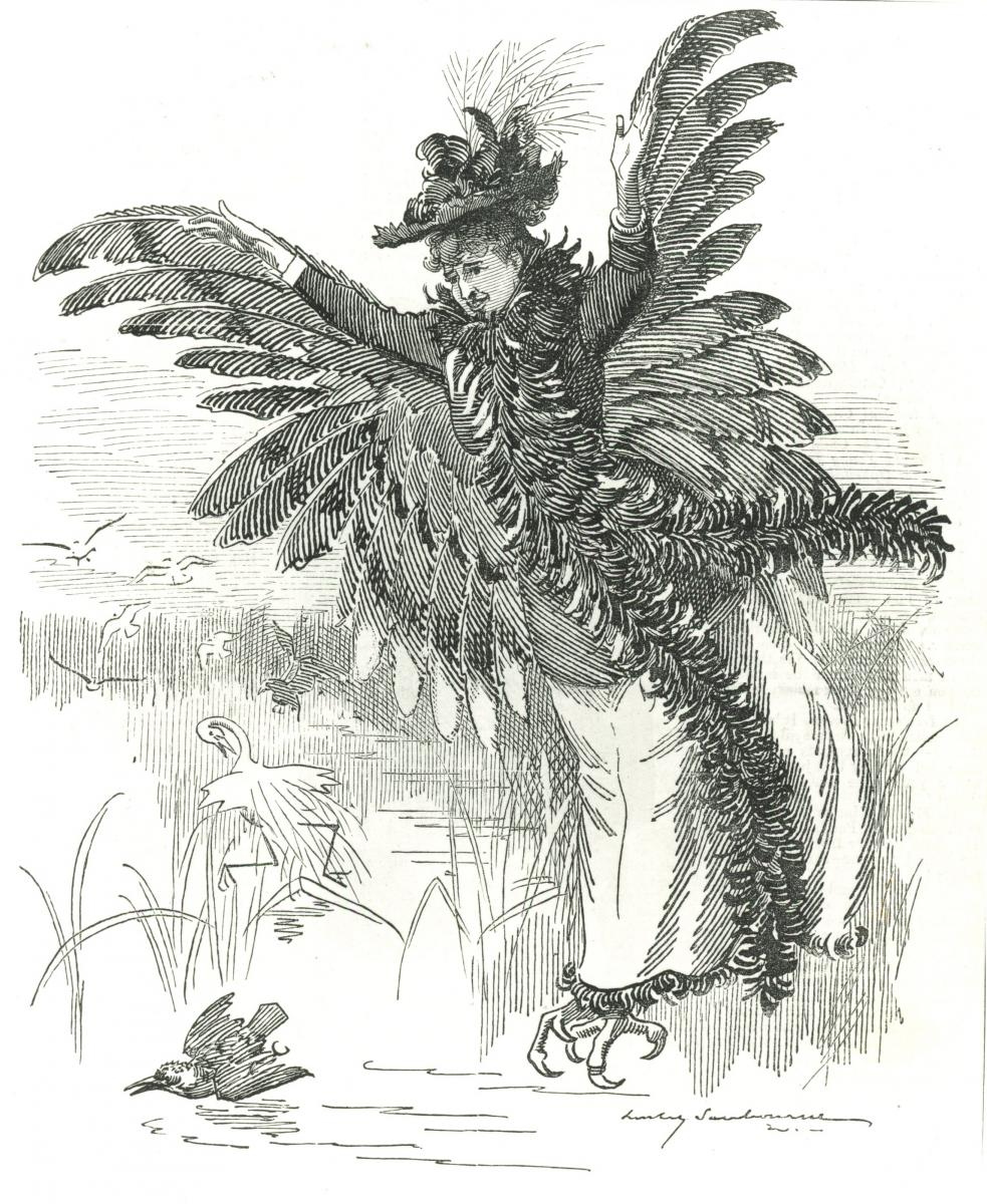 A bird of prey by Edward Linley Sambourne: Punch magazine, 1892