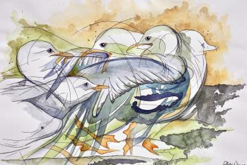 Feathered Fight watercolour painting